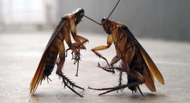 11 مكافحة الحشرات بالرياض شركة كلين لانج 0508020877
