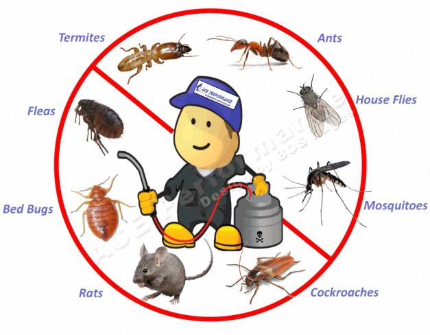 3 1 مكافحة حشرات بالدرعية شركة كلين لانج 0508020877