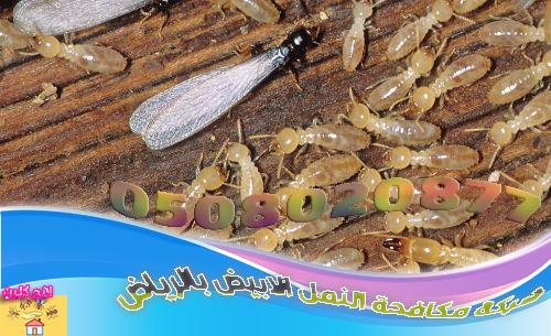 مكافحة النمل الأبيض بالرياض