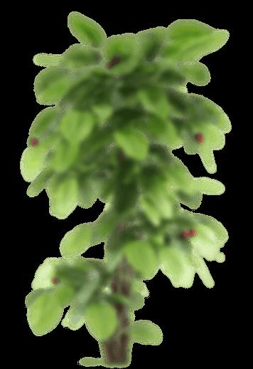 plant small 1 الصفحة الرئيسية
